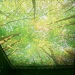 stretch_ceiling_64[1]